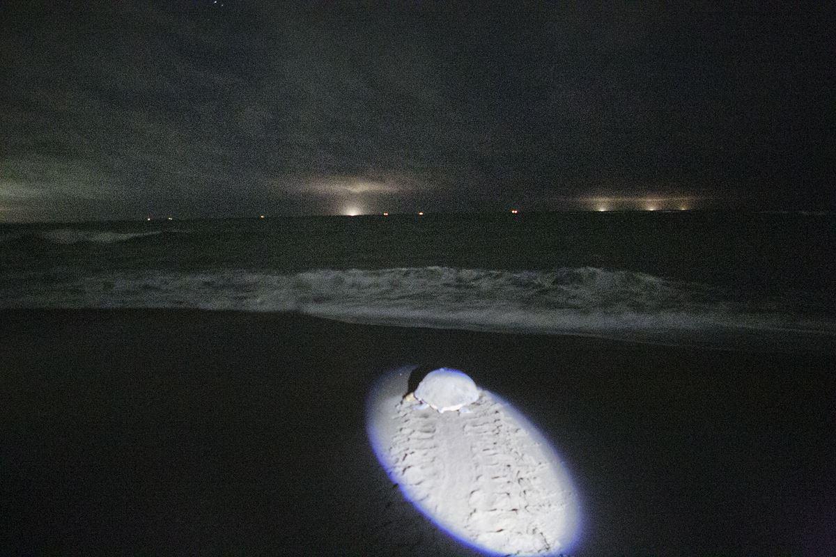 【7月~8月】■期間限定☆ウミガメ出産■~奇跡の感動に出会う夏~